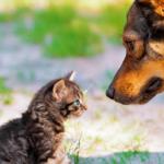 Descubra como funciona a visão de 5 animais diferentes
